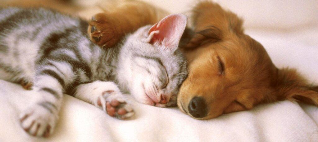 seguros proteccion de mascotas, salud, RC